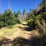 Plumas National Forest loop